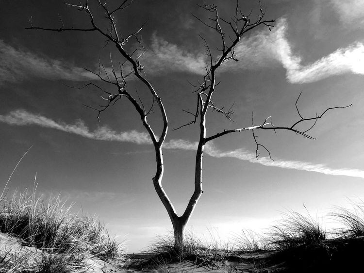 Abstract Bare Tree Beauty In Nature Blackandwhite Cloud - Sky Growth Low Angle View Michigan Nature Sky Tranquil Scene Tranquility Tree