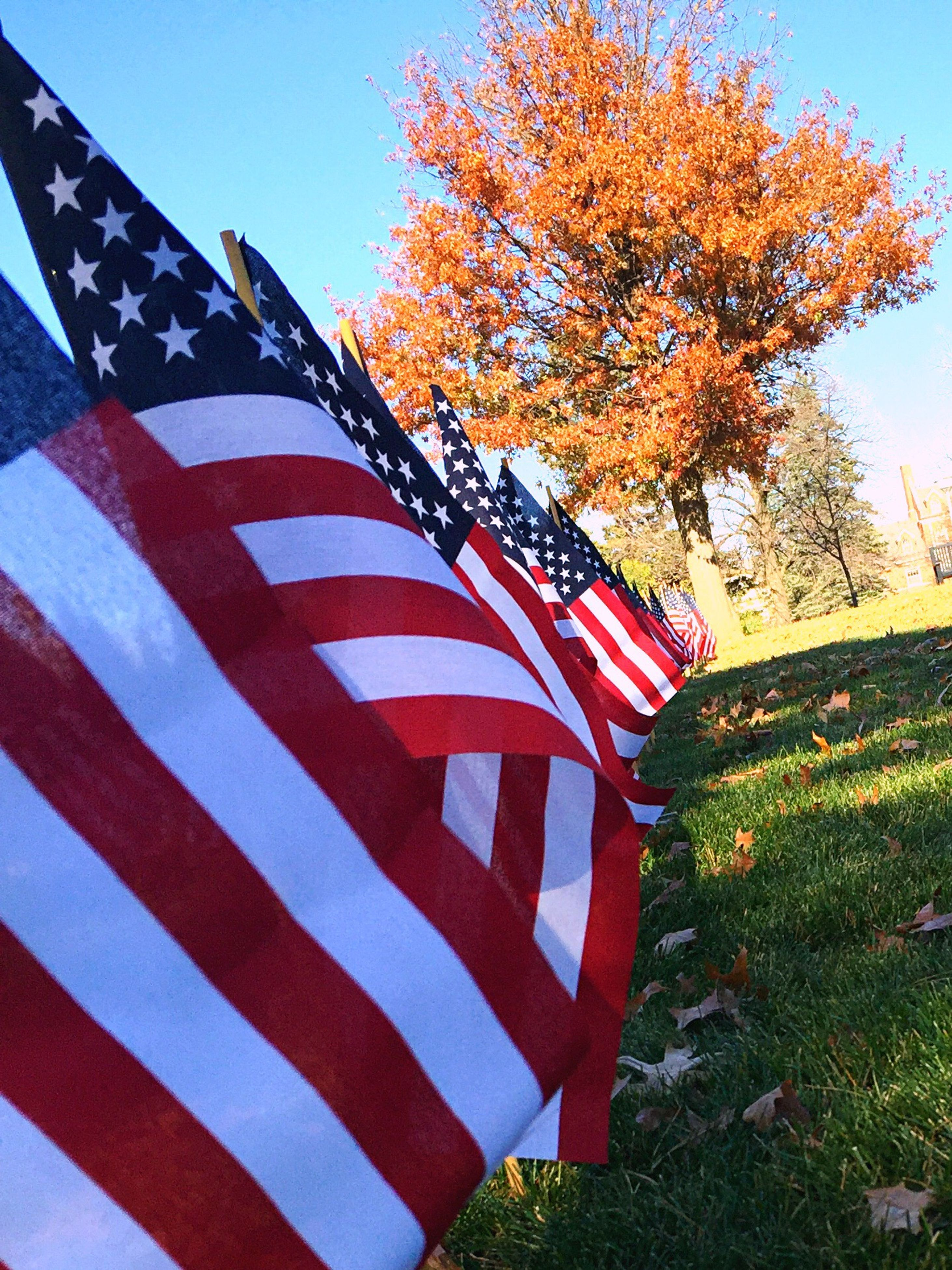 red, clear sky, patriotism, flag, blue, identity, national flag, low angle view, american flag, striped, sky, tree, sunlight, multi colored, day, no people, growth, close-up, outdoors, nature