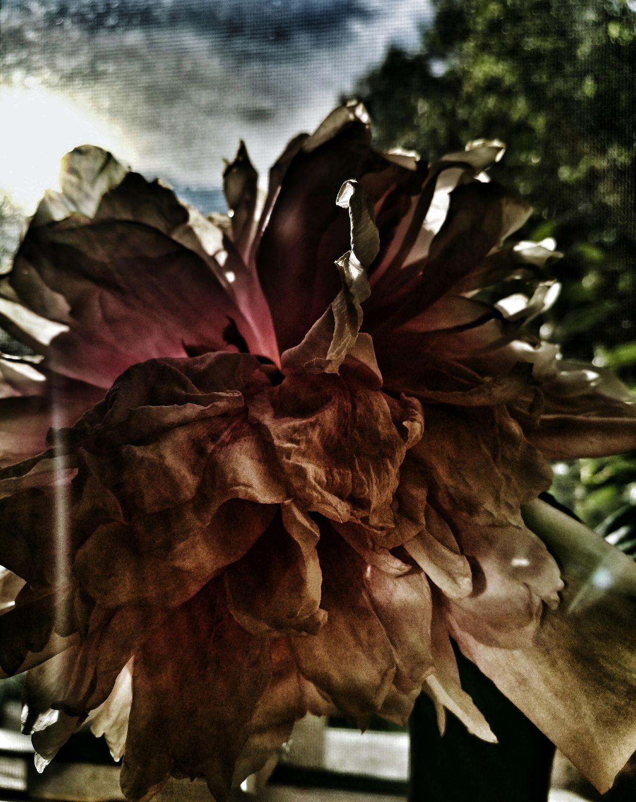 Flower Window Atmosphere