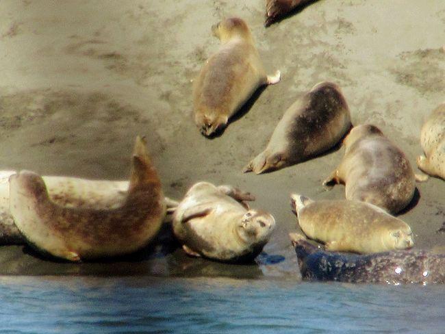 Sealion  Beachphotography Nature Adorable Sea Life