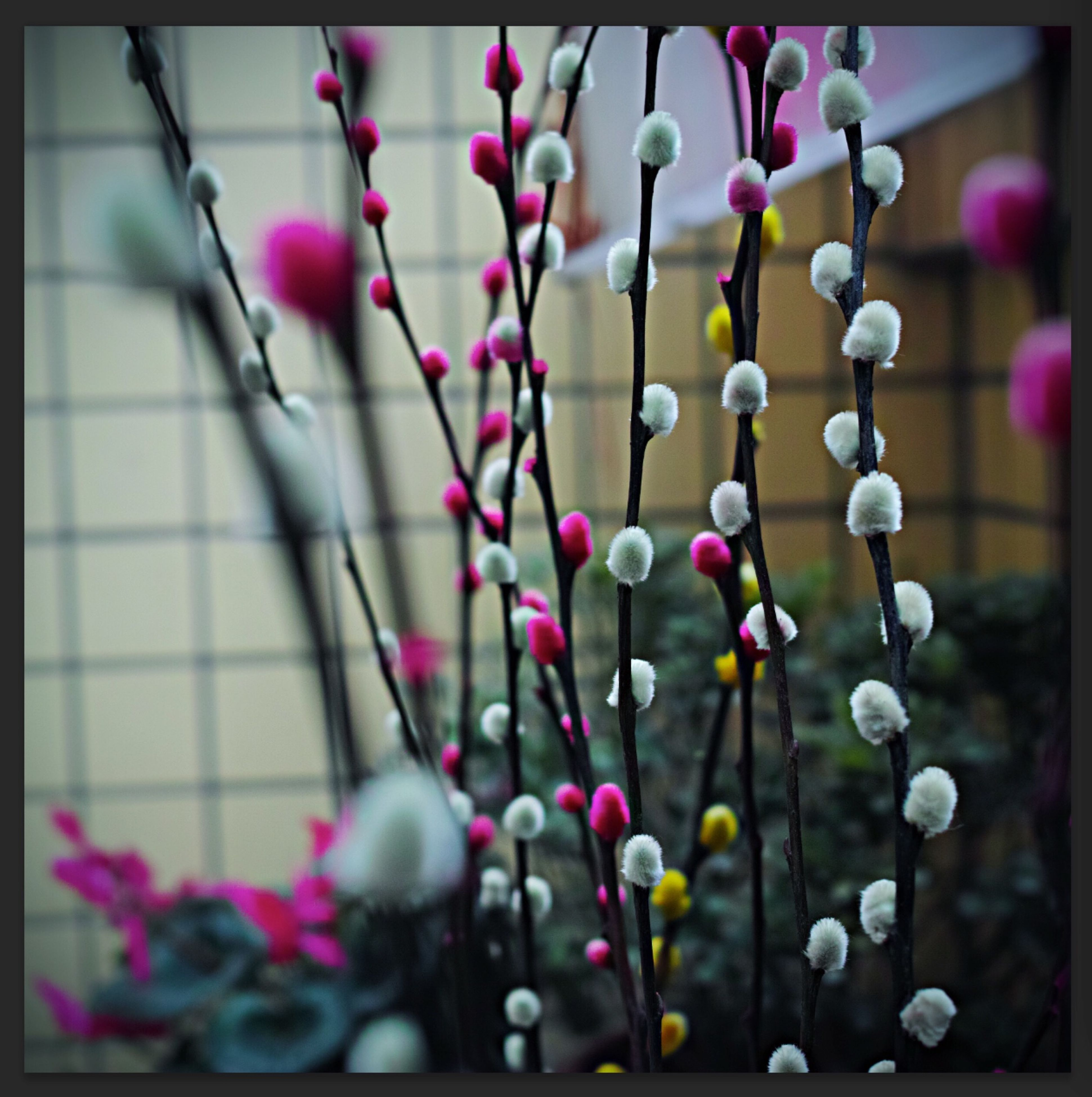 transfer print, hanging, focus on foreground, close-up, auto post production filter, selective focus, flower, indoors, decoration, metal, no people, fence, day, fragility, lighting equipment, in a row, plant, abundance, electricity