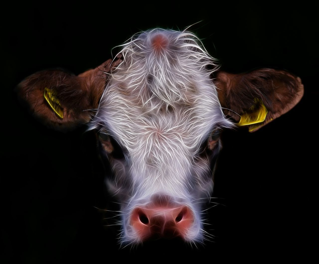 Cow Face. Cow Cattle Farm Cow Face Mood Scary Face Getting Creative Natures Diversities Fine Art Photography Colour Of Life