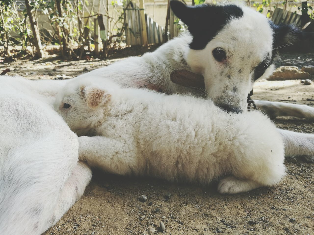 Domestic Animals Nature Outdoors No People Puppy Doggy Love