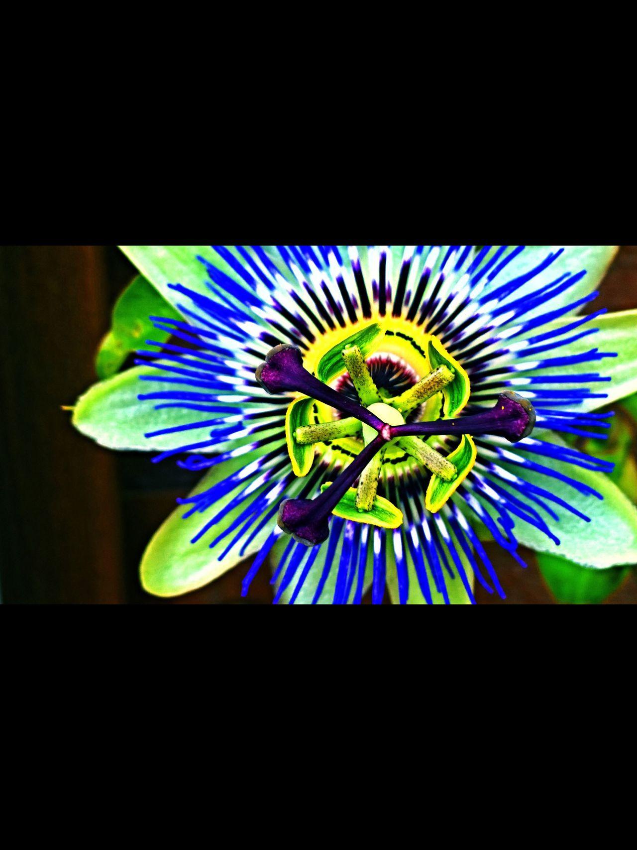 Eye4photography  Tadaa Community Streamzoofamily EyeEm Best Shots The Ville Malephotographerofthemonth StreamzooPics StreamzooFlowers Flowers Flowerporn