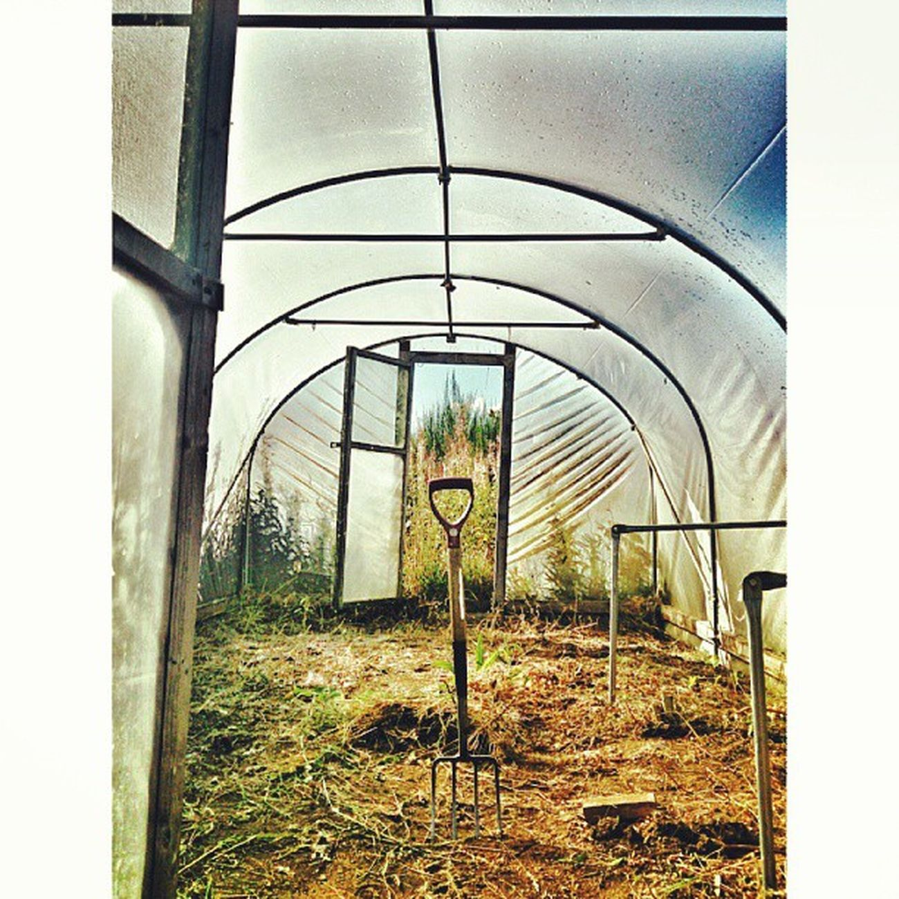 Todays mission complete :) Mycamerastories Polytunnel Mission Fork garden repetition weeding hardwork missioncomplete frame handle aberdeenshire scotland