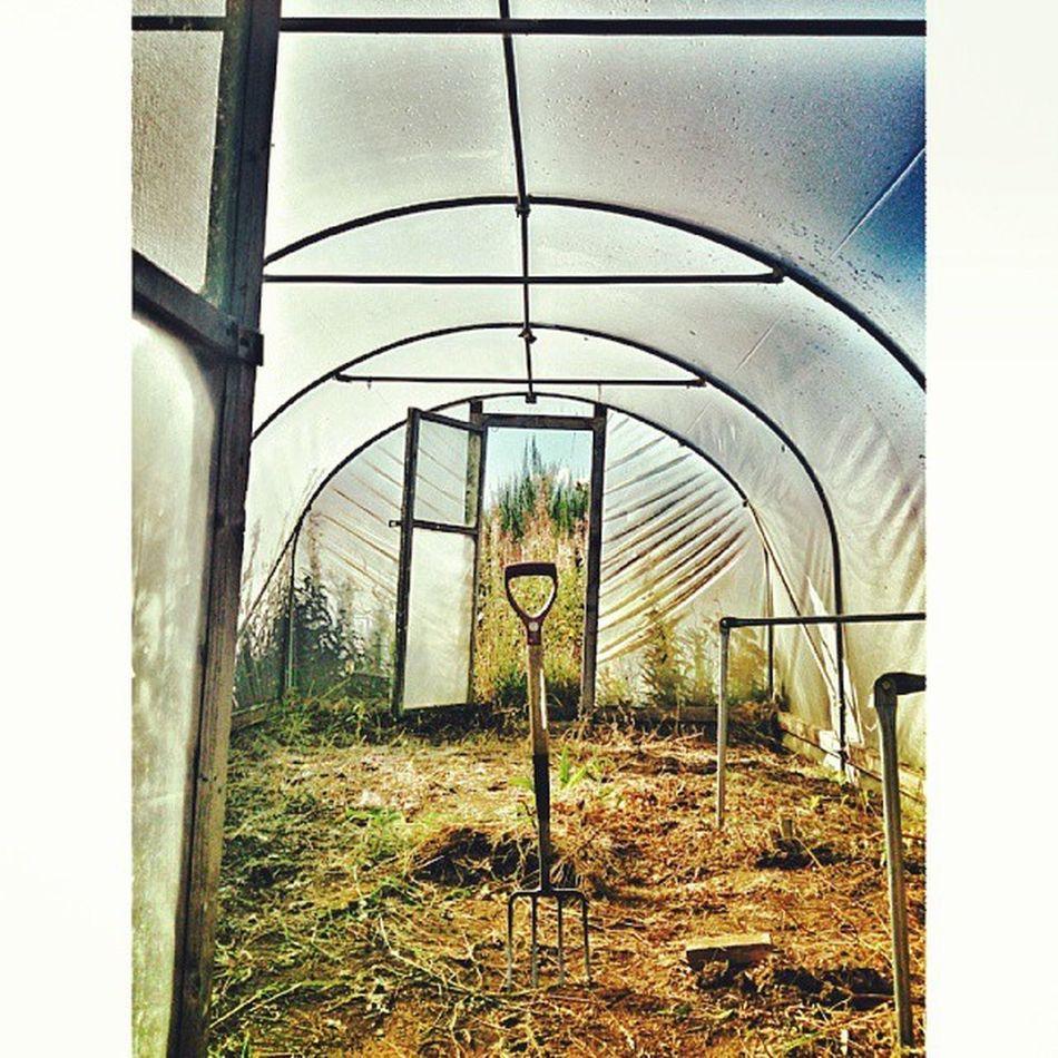 Todays mission complete :) Mycamerastories Polytunnel Mission Fork garden repetition weeding hardwork missioncomplete frame handle aberdeenshire scotland