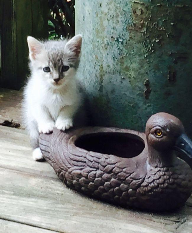 Poe's Class Photo Kittens Kitty Kitten Kitten Love Fluffykitty