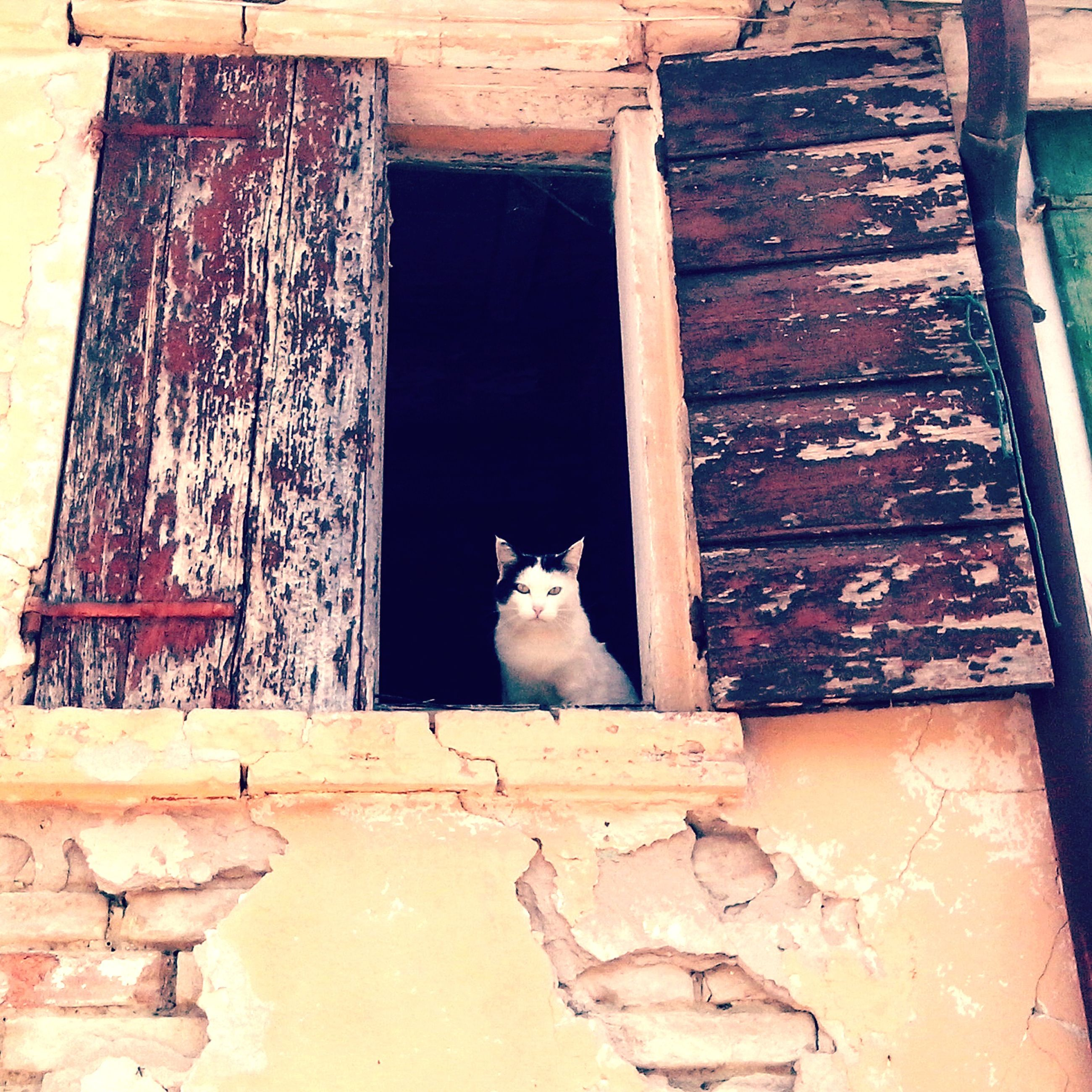 animal themes, domestic cat, one animal, cat, pets, domestic animals, mammal, feline, architecture, building exterior, built structure, house, sitting, wall - building feature, wood - material, low angle view, whisker, relaxation, outdoors, day