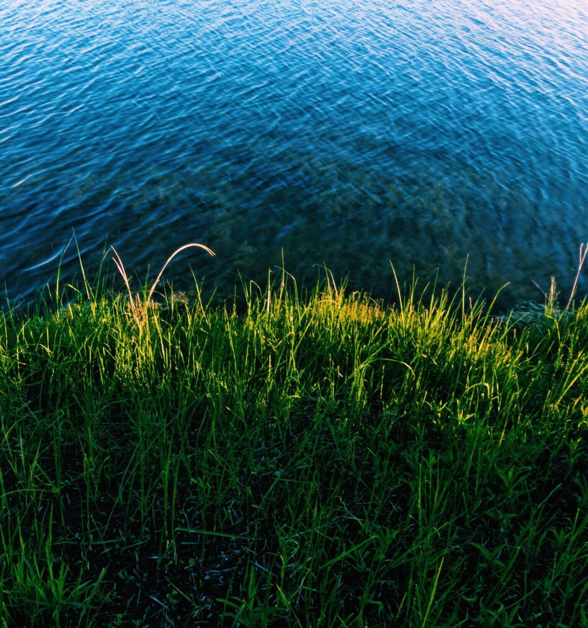 nature, grass, water, growth, tranquility, rippled, beauty in nature, outdoors, day, no people