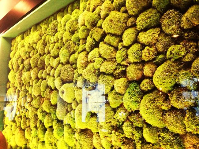 A wall of moss at Amicus! Must've known I was comin...