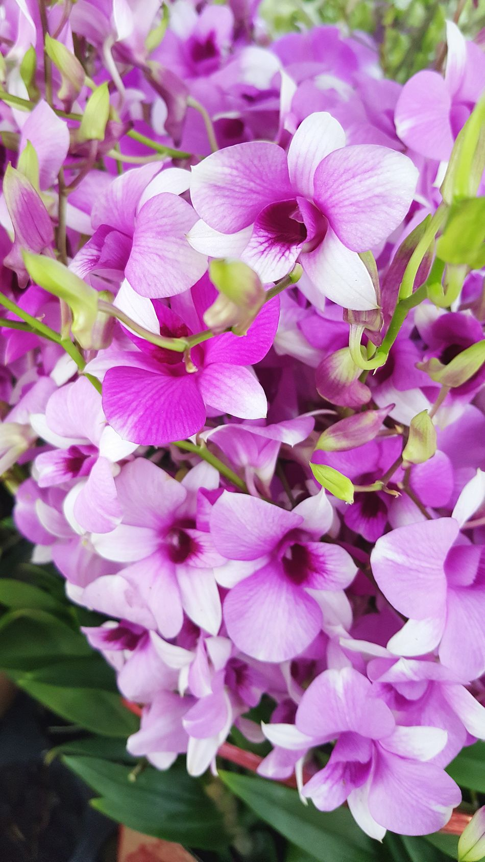 Orchids Orchid Blossoms Orchid Flower Orchidslover Orchid Collection Orchid Blossoms Orchid Flower Orchids Orchidflower Orchids Collection Orchid Flowers OrchidLover Orchid Pink Flower Pink Flowers Pink Flower 🌸 Pinkflowers Pink Blossoms