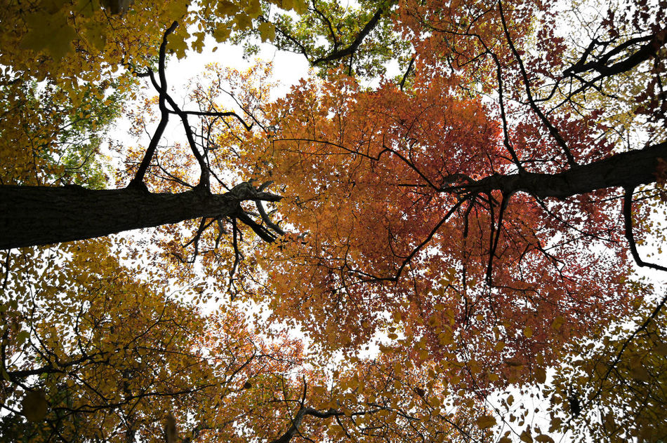 Autumn Beauty In Nature Branch Low Angle View No People Outdoors Sky Tree