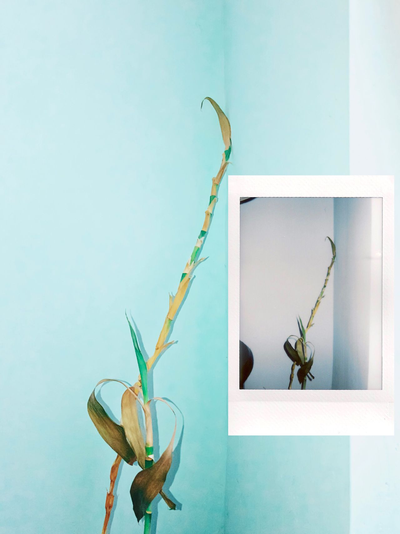 Instant Photo A Day Growth Nature Plant Fragility Flower No People Leaf Beauty In Nature Green Color Animal Themes Freshness Day Close-up Flower Head Outdoors Minimalism Aesthetics Simplicity Film Photography Film Is Not Dead Growth Nature Beauty In Nature