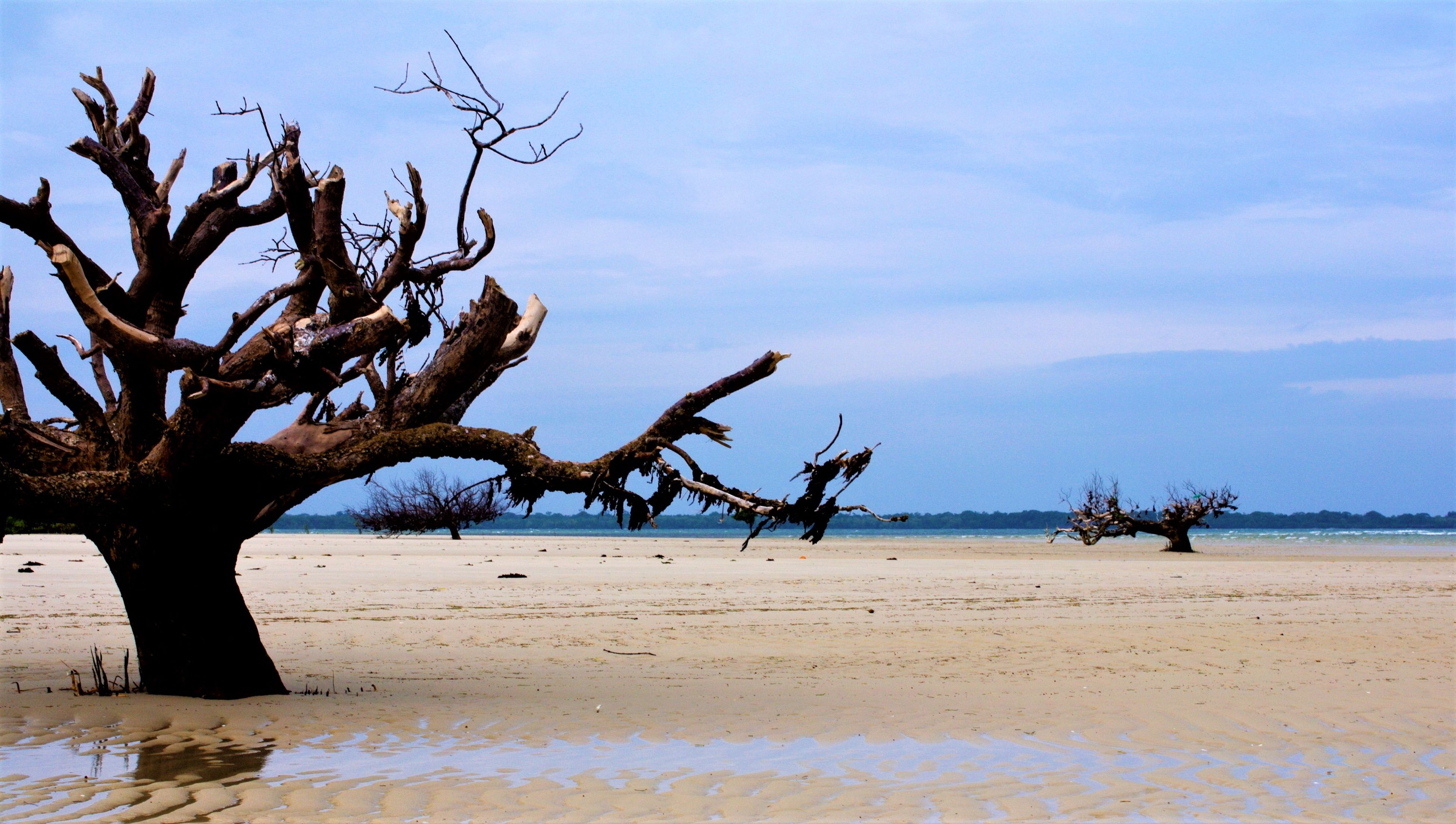 Fringe mangrove cut for fuelwood Coastal Degradation Degradation Gazi Bay Mangrove Cutting Mangrove Degradation Sonneratia Alba Tree Cutting
