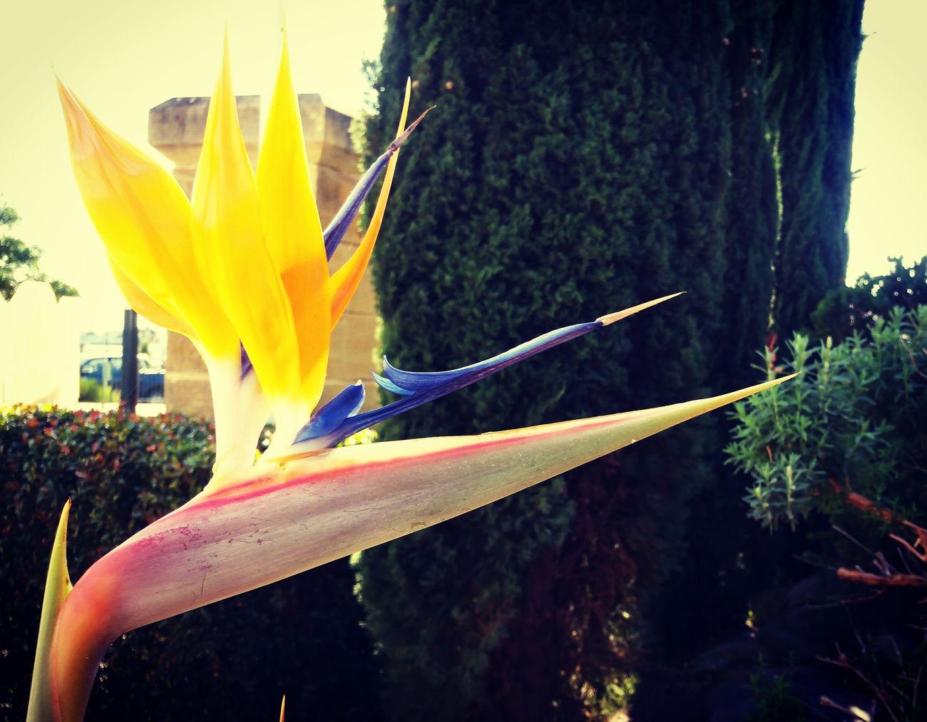 Birdofparadise Flower Ms Poppy J