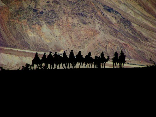 Camel Shillouette Animal Shillouette Nature On Your Doorstep Nature Photography Nature_collection Ladakh Protecting Where We Play Showcase March Darkness And Light Nubra Valley Cold Desert Cold Desert India Landscapes With WhiteWall The KIOMI Collection