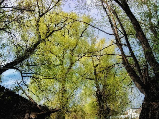 Backgrounds Beauty In Nature Branch Day Growth Low Angle View Nature No People Outdoors Sky Tranquility Tree