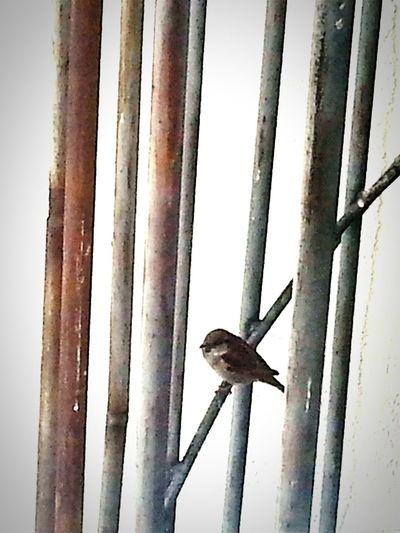 Bird Photography Birds Of EyeEm  Bird Watching