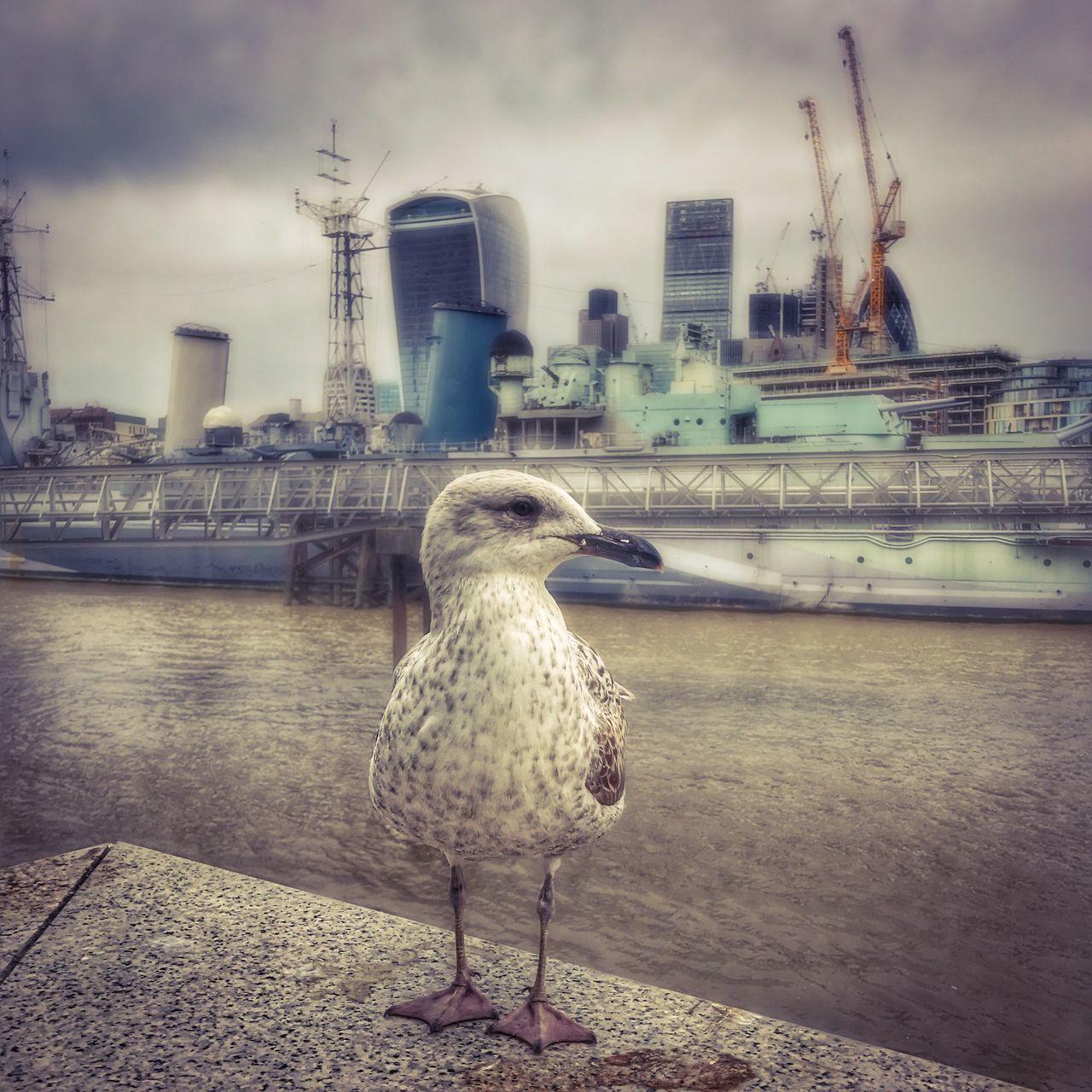 Bird Animal Themes One Animal Seagull River Animal Portrait Bird Photography Bird Portait London Southbank London