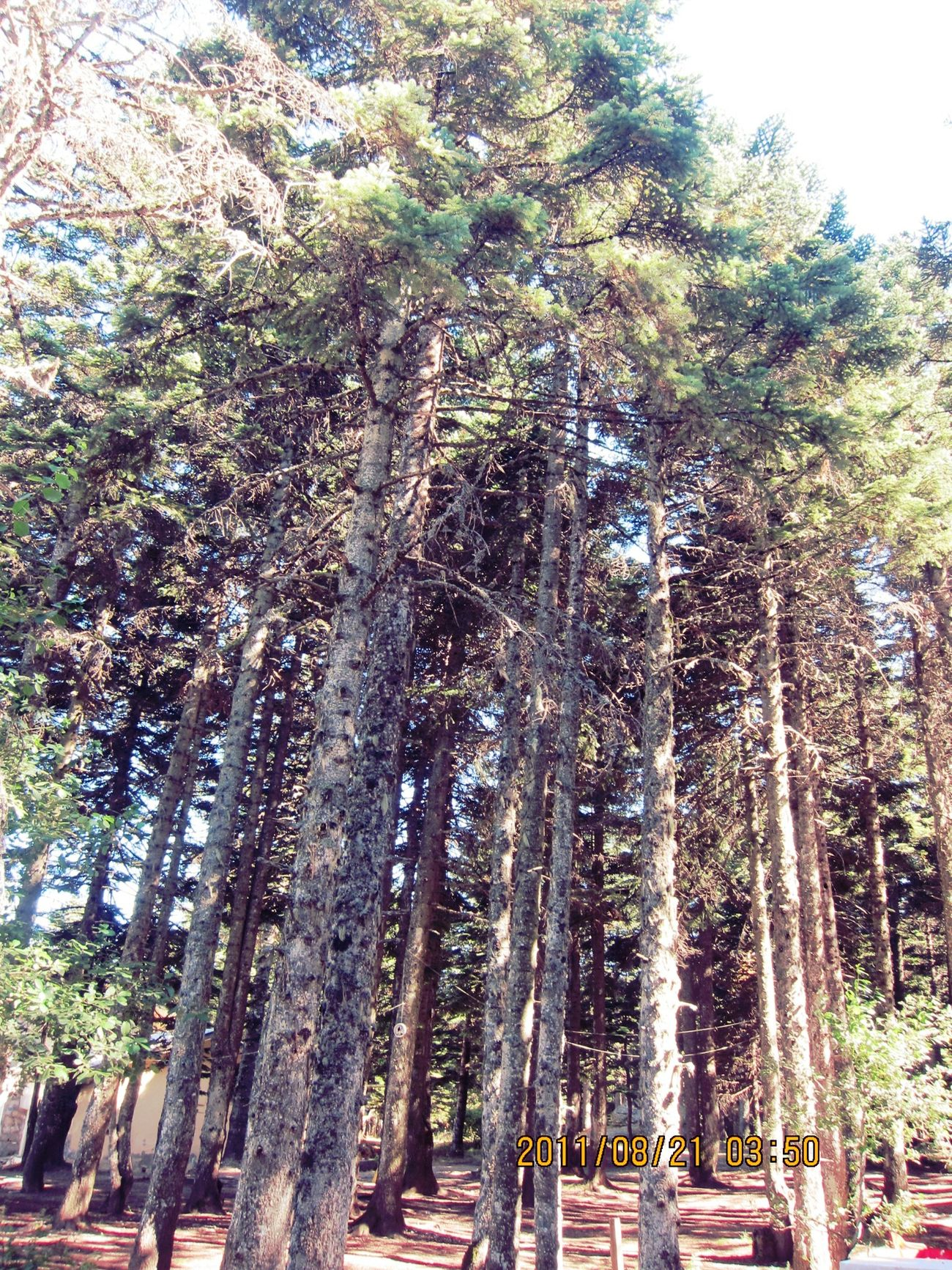 Tree Tree