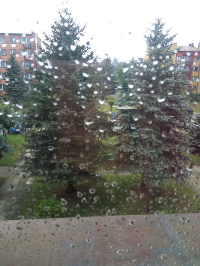 Water Raindrops Window To The World After Storm⚡ Cars Trees Garden-plot Busch