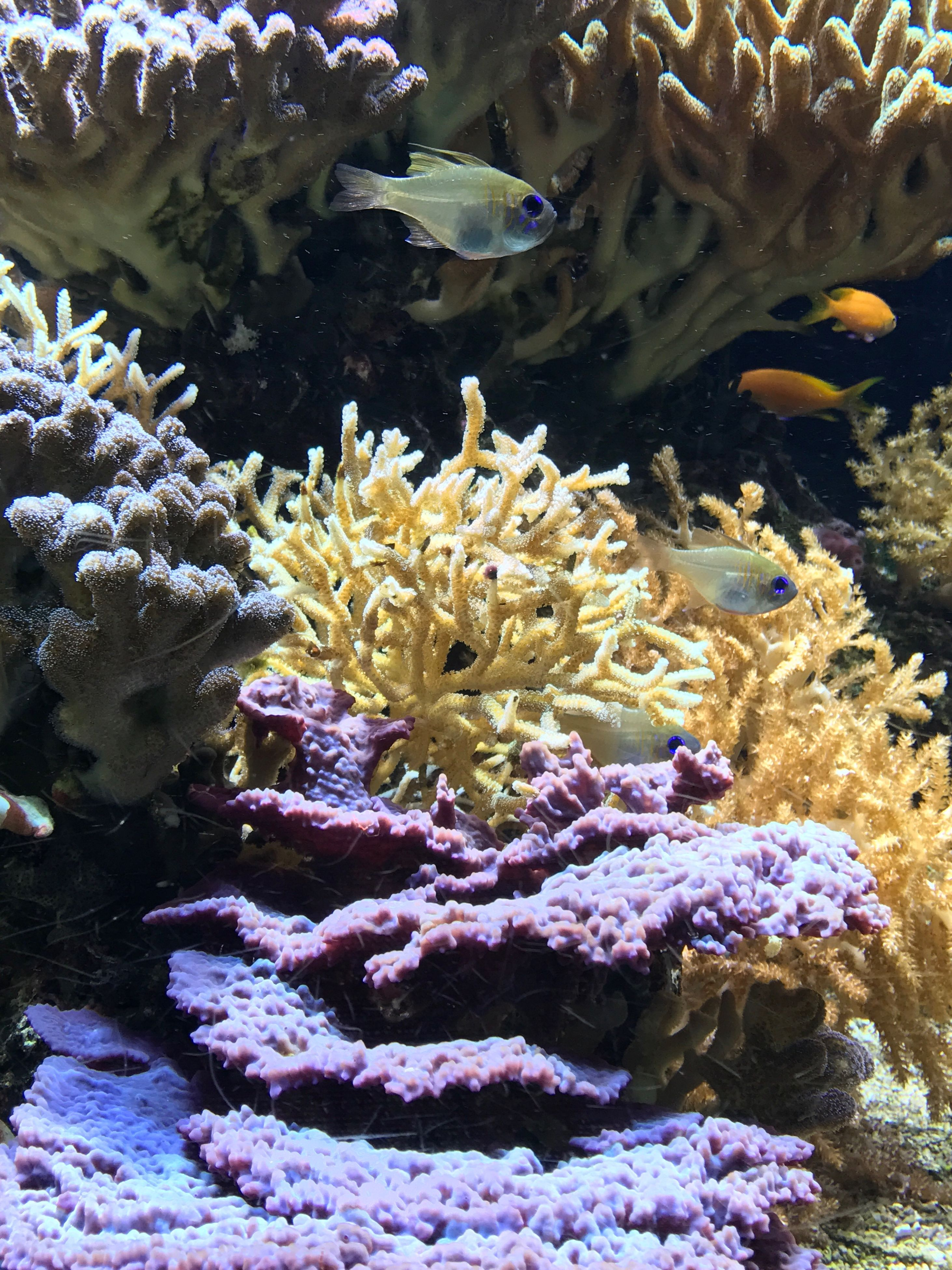 underwater, animal themes, sea life, water, coral, animals in the wild, undersea, no people, nature, swimming, one animal, sea, beauty in nature, aquarium, sea anemone, indoors, close-up, clown fish, day