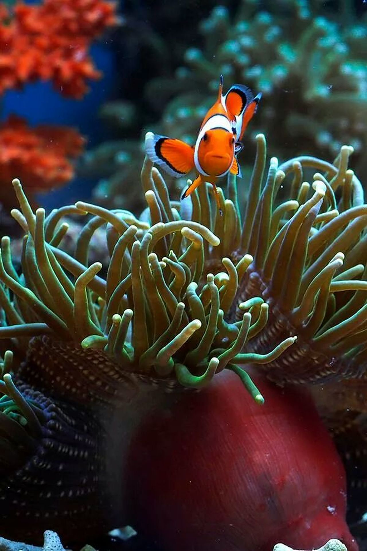 Nemo Eye For Photography Macro Photography Macro Clique Macro_collection
