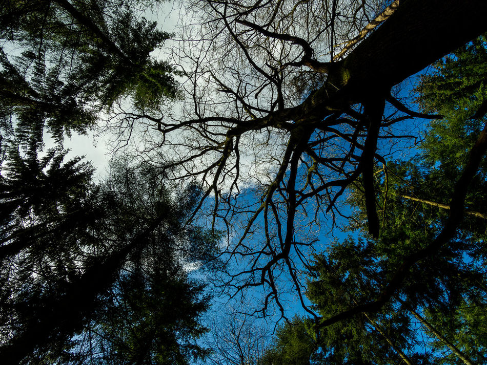 Beauty In Nature Branch Day Forest Growth Low Angle View Nature No People Outdoors Scenics Sky Tranquility Tree Tree Trunk Amazing Forest Trees Forest Photography Life In Colors Landscape EyeEm Best Shots EyeEm Nature Lover Woodpile Saturday Freshness Plant