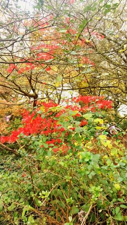 Tree Nature Growth Beauty In Nature Day Outdoors No People Leaf Low Angle View Full Frame Branch Tranquility Backgrounds Autumn Plant Flower Close-up Freshness Sky Red Autumn Autumn 2017 Autumn Colors Kingsheathpark Birmingham UK