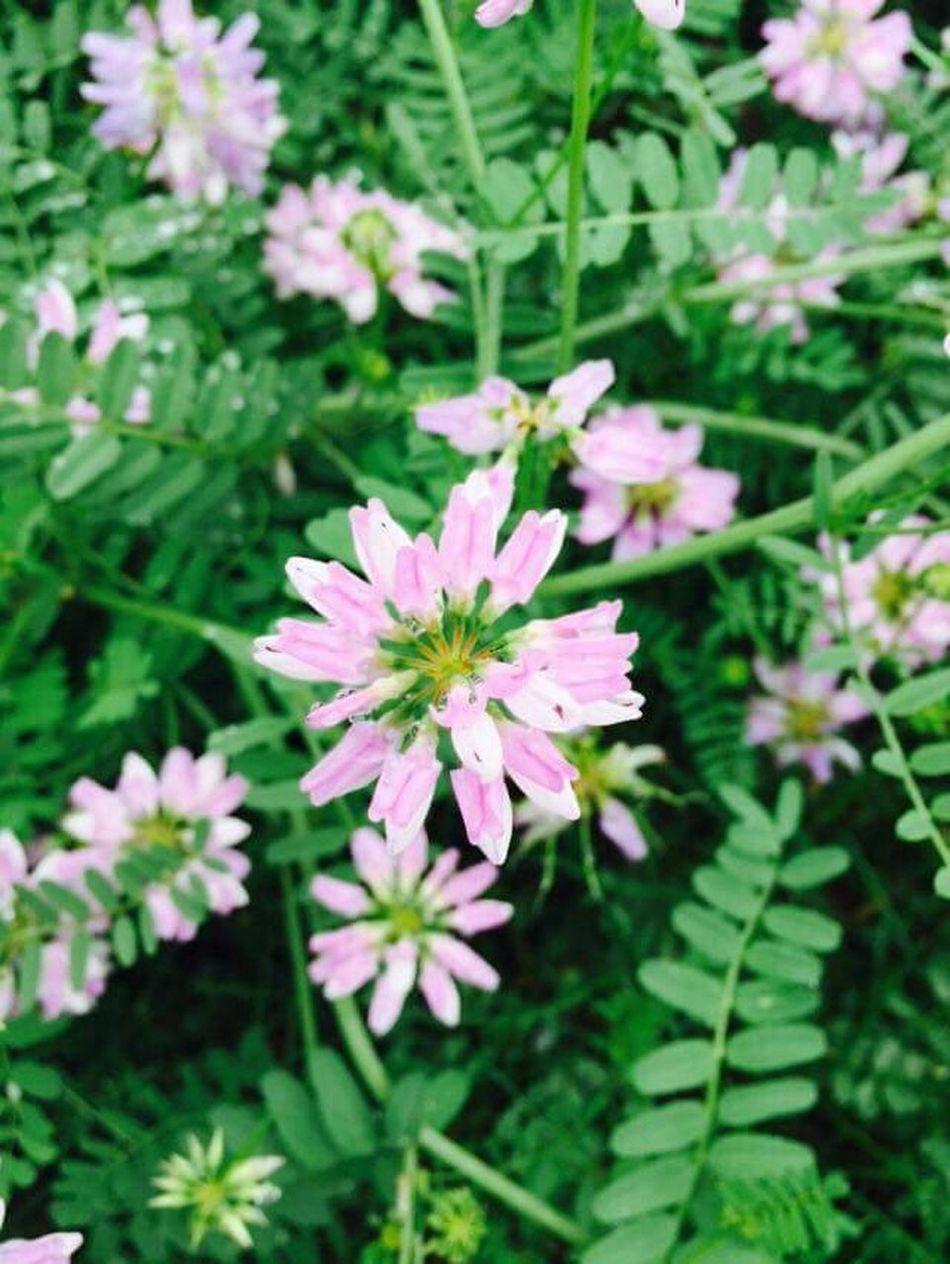 Them pretty lil teeny tiny things that make you smile! ^U^ ❤ Nature Blackwellforestpreserve Prettyflowers
