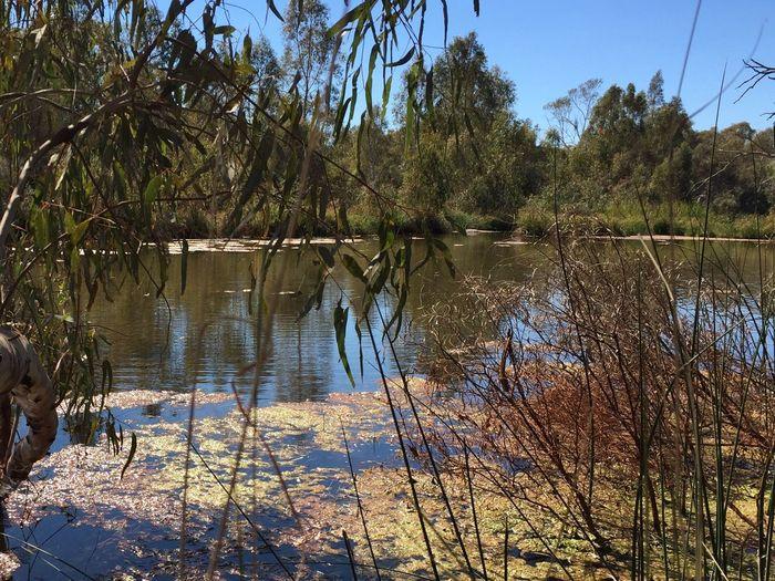 Western Australia Lake Pilbara Tranquility Nature Beauty In Nature Outdoors