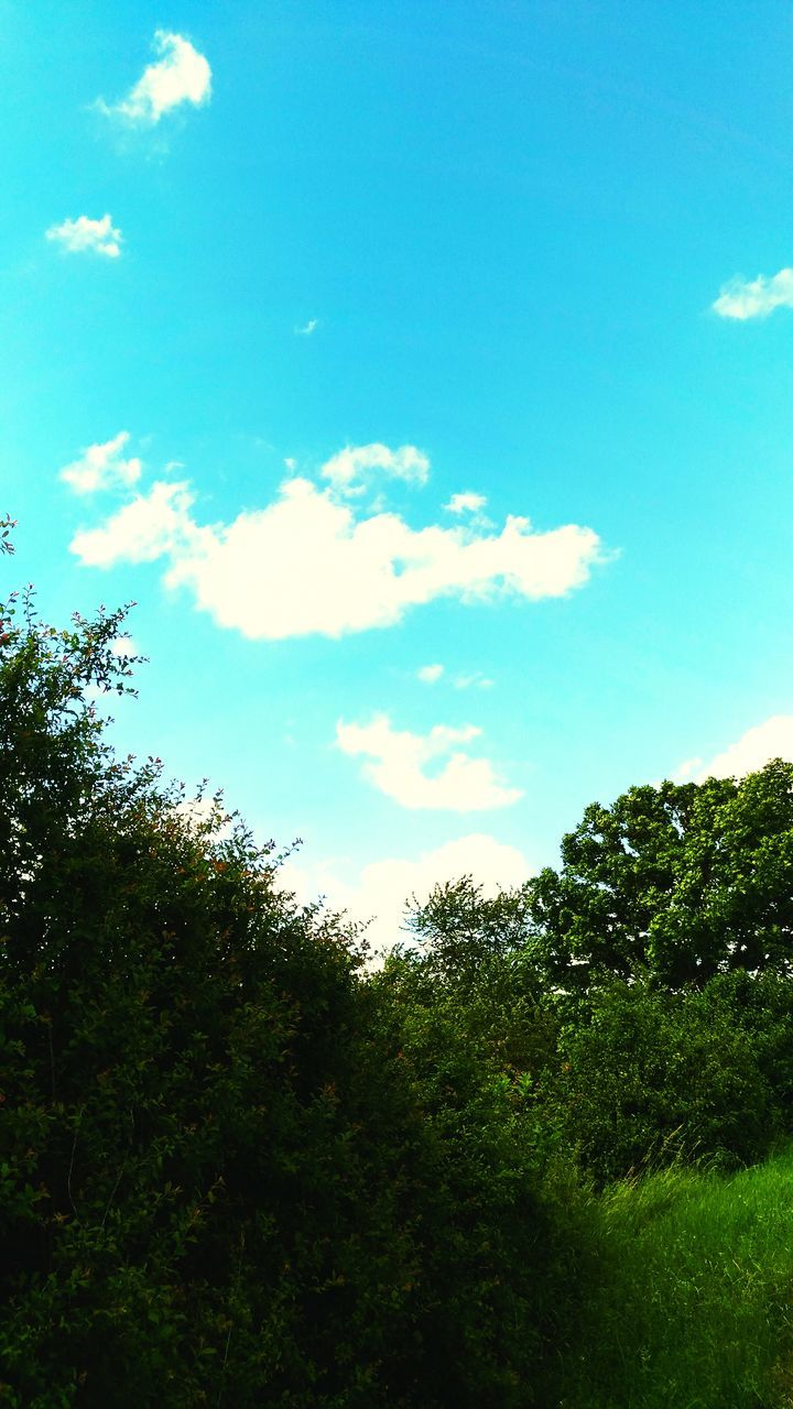 tree, sky, nature, beauty in nature, day, cloud - sky, tranquility, no people, outdoors, scenics, low angle view, growth, landscape, forest