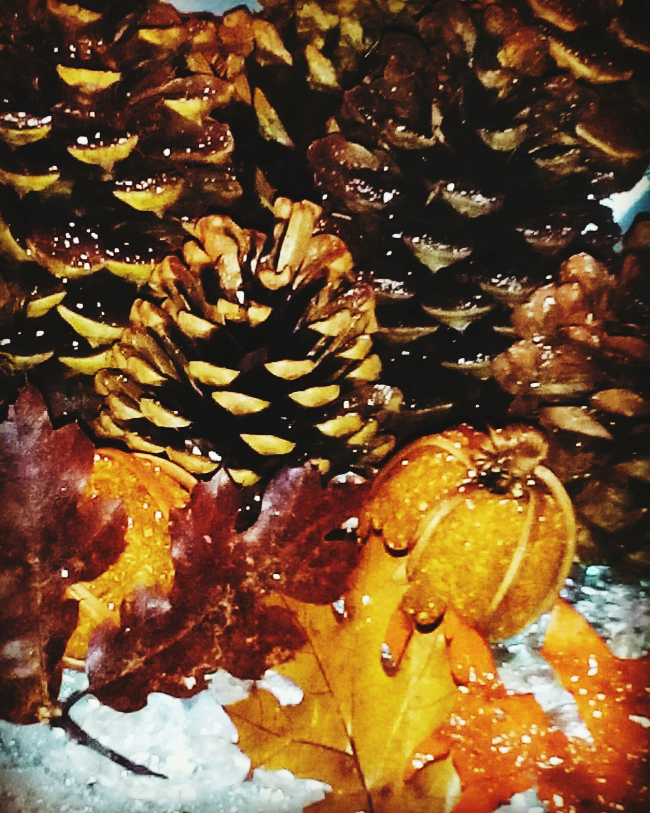 Home For The Holidays Fall Pinecones ❄snow❄ Wonderful Moment