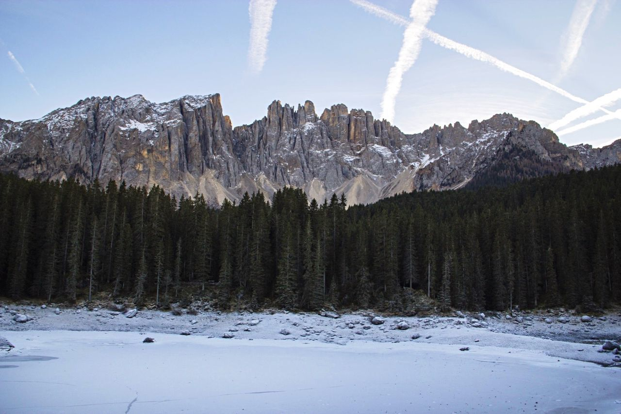 Trees Growing On Snow Covered Field By Rocky Mountains