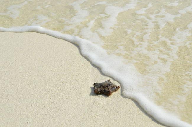 Beach Maldives Nature Outdoors Sand Sea Starfish  Starfish At Beach Wave