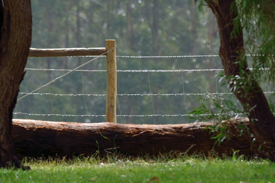 Australia Beauty In Nature Day Field Grass Growth Nature No People Outdoors Pemberton Tree Western Australia
