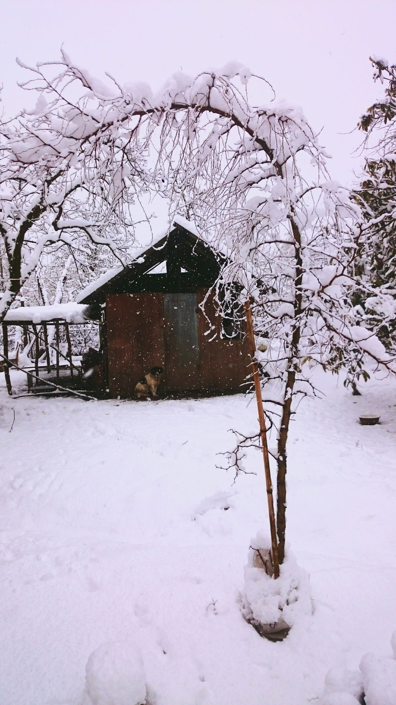 Snow Winter January January 2017 Georgia Guria Lanchkhuti