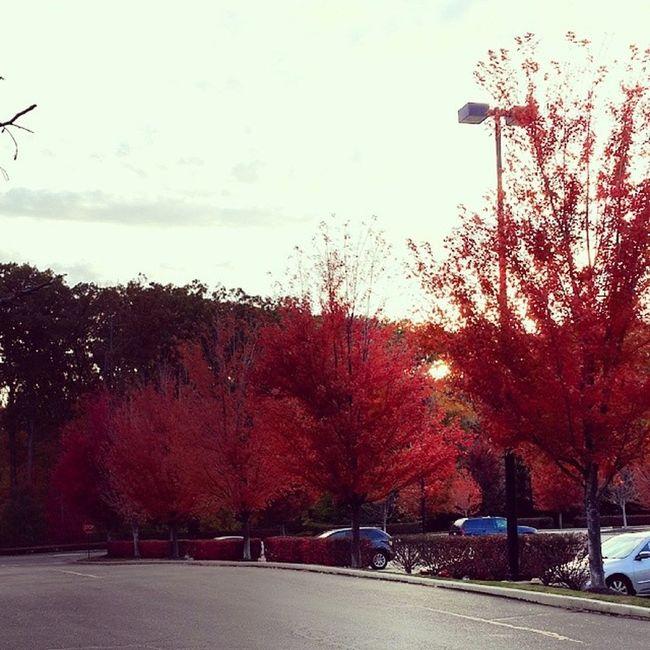 عدستي تصويري  المصورون_العرب ذكريات يومياتي اوهايو mall us usa cleveland ohio mobt3t oh missing walking loanly walking red tree nature clouds sky 2013 fall street