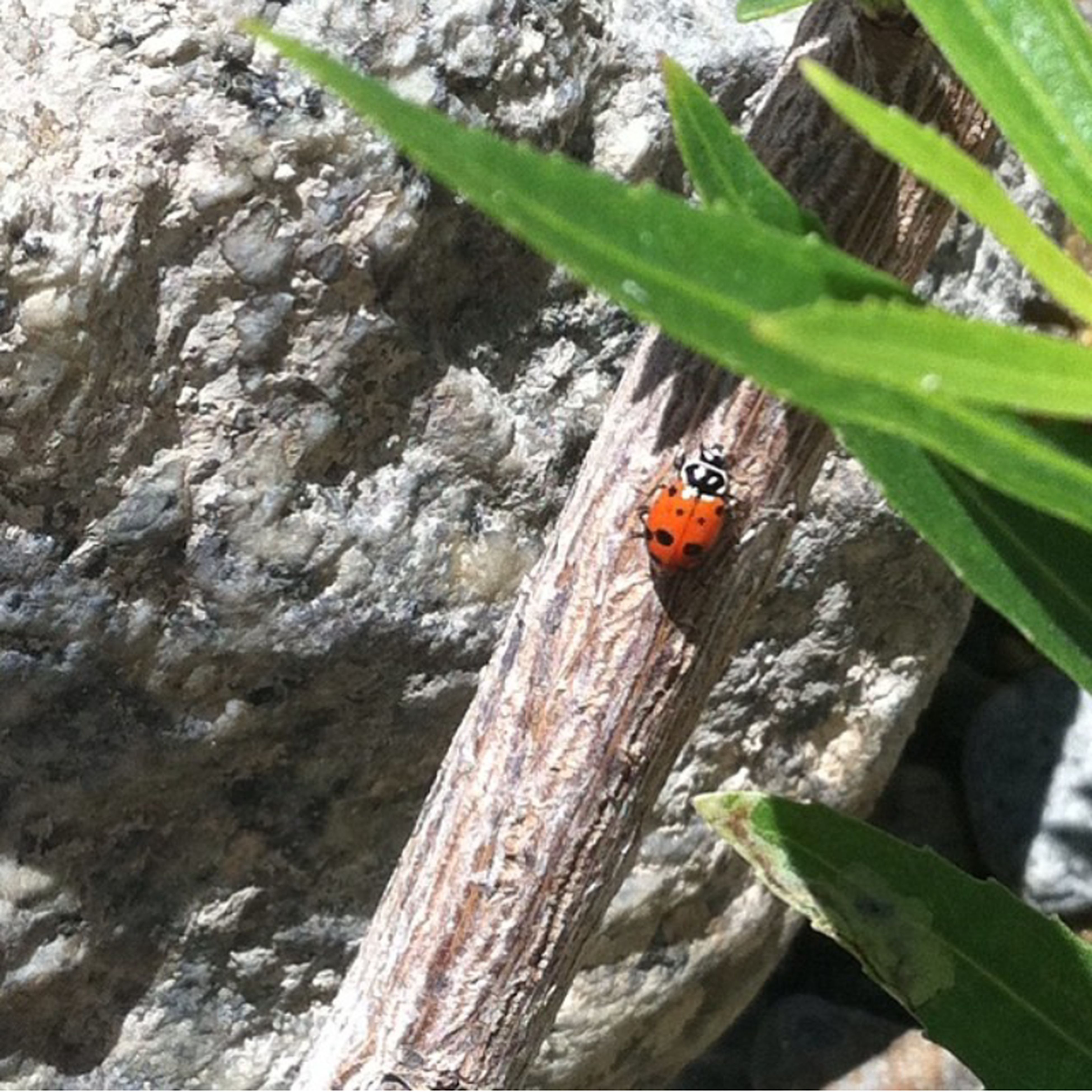 Coffee Camp Lady Bug Nature On Your Doorstep