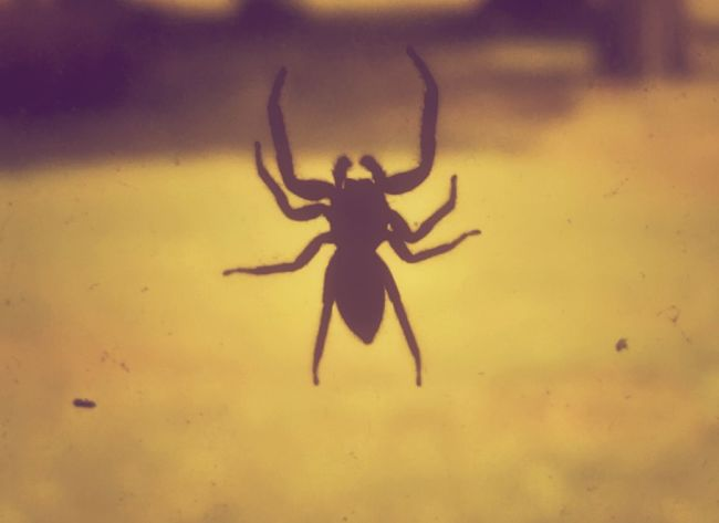 https://youtu.be/33BcgqMhqSY The Impurist Year Of The Spider Wildlife We Are Nature EyeEm Animal Lover Jumping Spider Show You My Dark Side Zoology No People The Darkness Within Musical Photos Vintage Eyes Spiders For Steven Arachni-therapy Nightmares And Dreamscapes