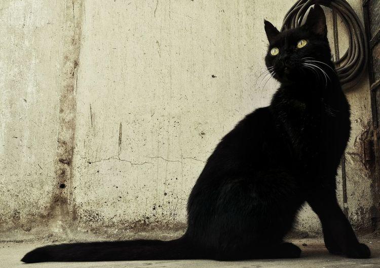 Animal Themes ElMushu Feline Migatomodelo Gato Cat Cats Domestic Cat Domestic Animals Pets