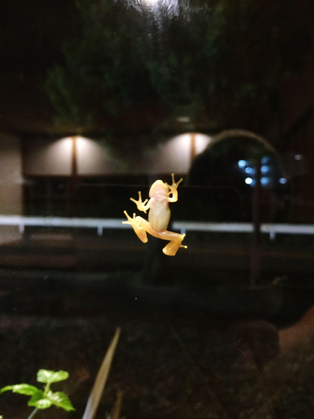 雨上がり 雨蛙 窓ガラス かわいい