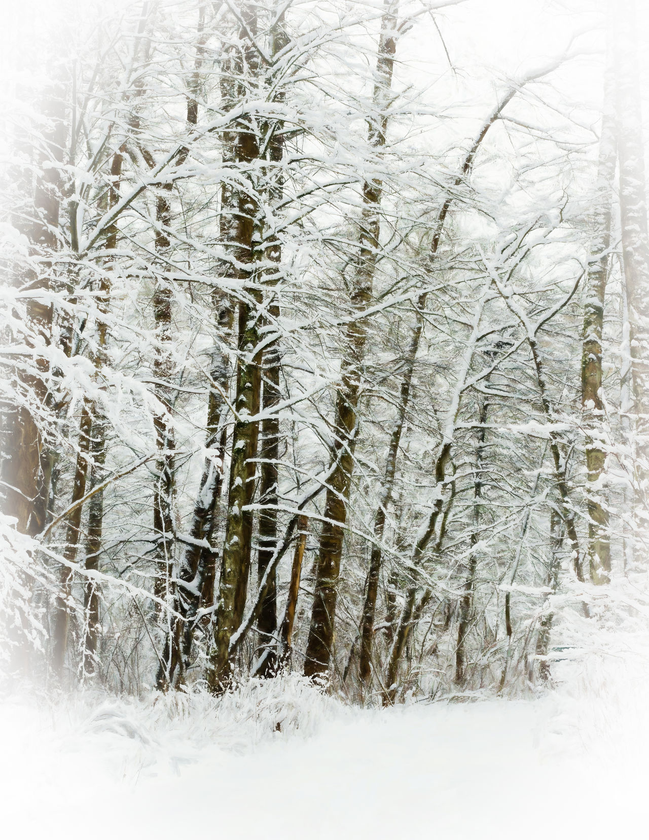Beauty In Nature Branch Close-up Cold Temperature Day Forest Frozen Nature No People Outdoors Scenics Snow Snowing Tree Weather White Color Winter