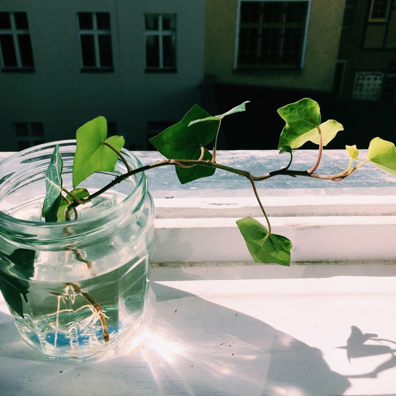 Plant Propogation