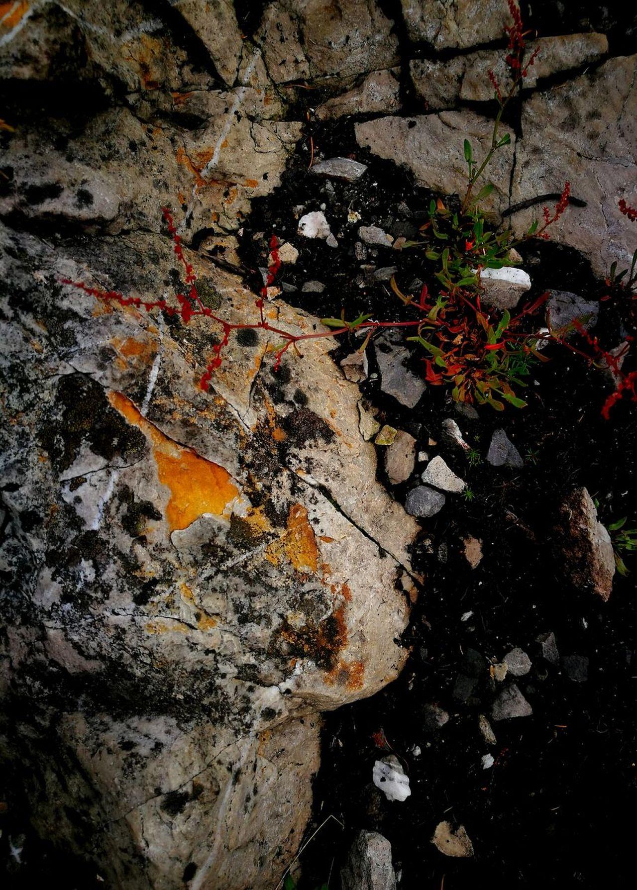 Rock Wild Flower Dark Earth Rich Colour Textures Outdoors Nature