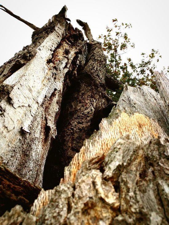 Trees Outdoors Death Lighting Strikes Nature