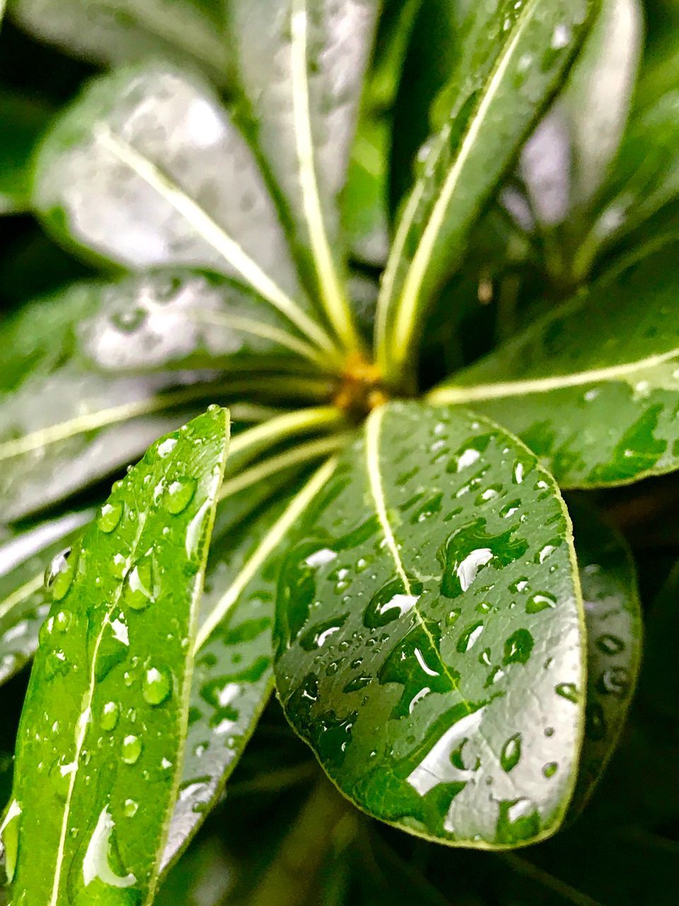leaf, drop, water, green color, wet, nature, close-up, growth, beauty in nature, plant, freshness, no people, raindrop, day, focus on foreground, outdoors, fragility