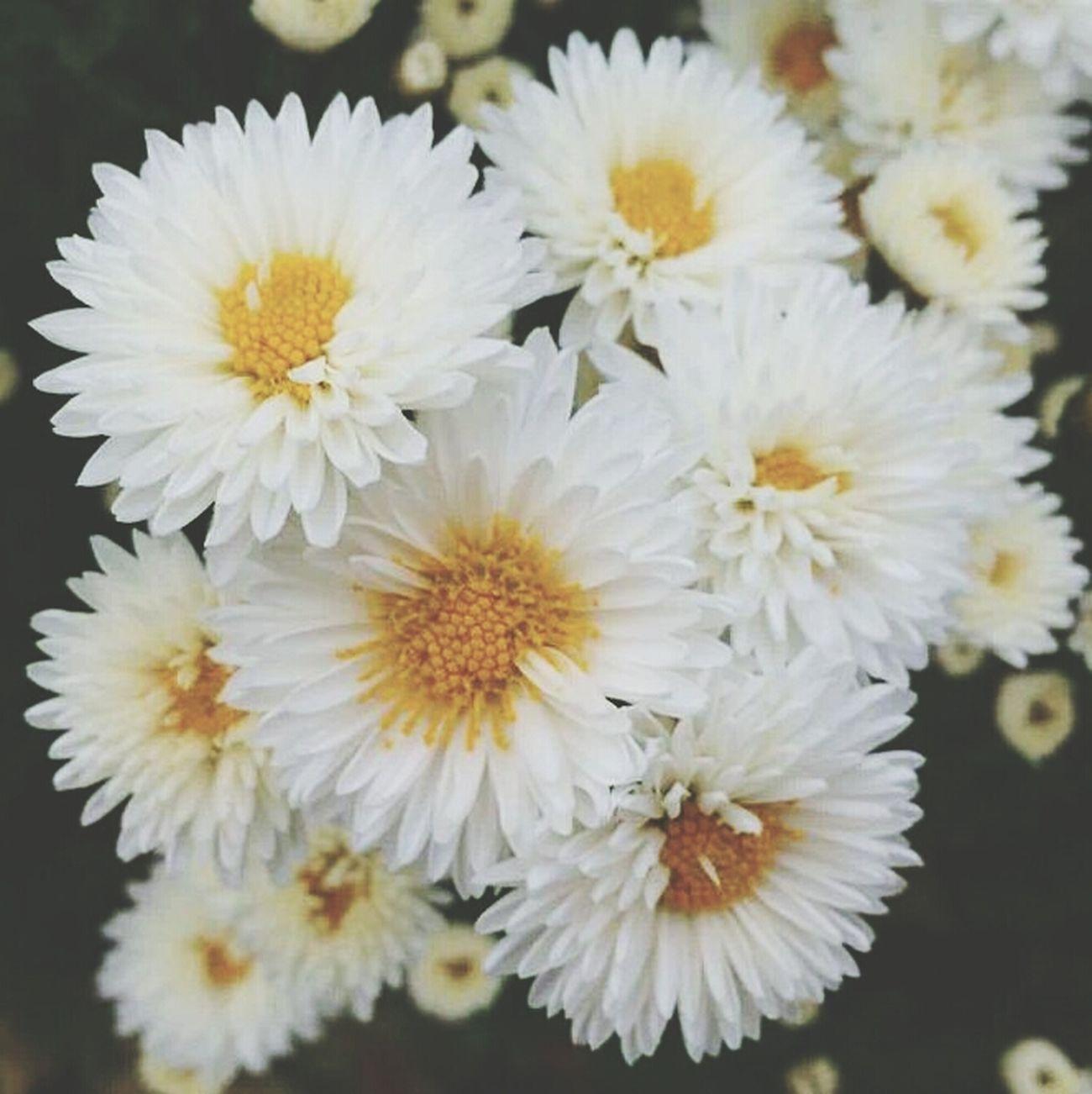 何となく今の気持ち ~みんなに寄り添っていたい~ Flower White 白 仲間