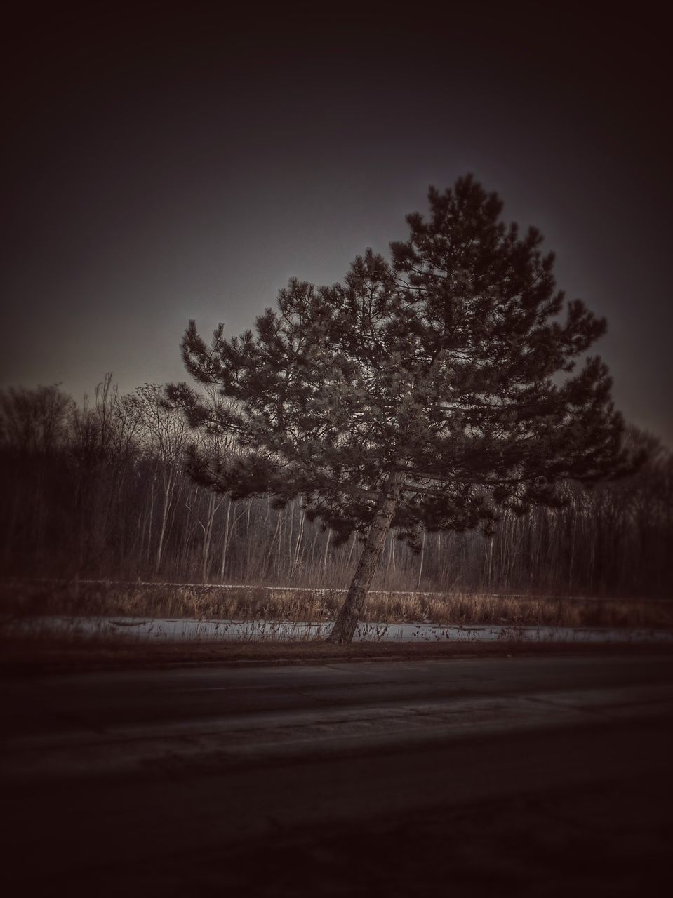 tree, nature, landscape, no people, tranquility, tranquil scene, outdoors, beauty in nature, scenics, night, winter, clear sky, sky, growth, snow
