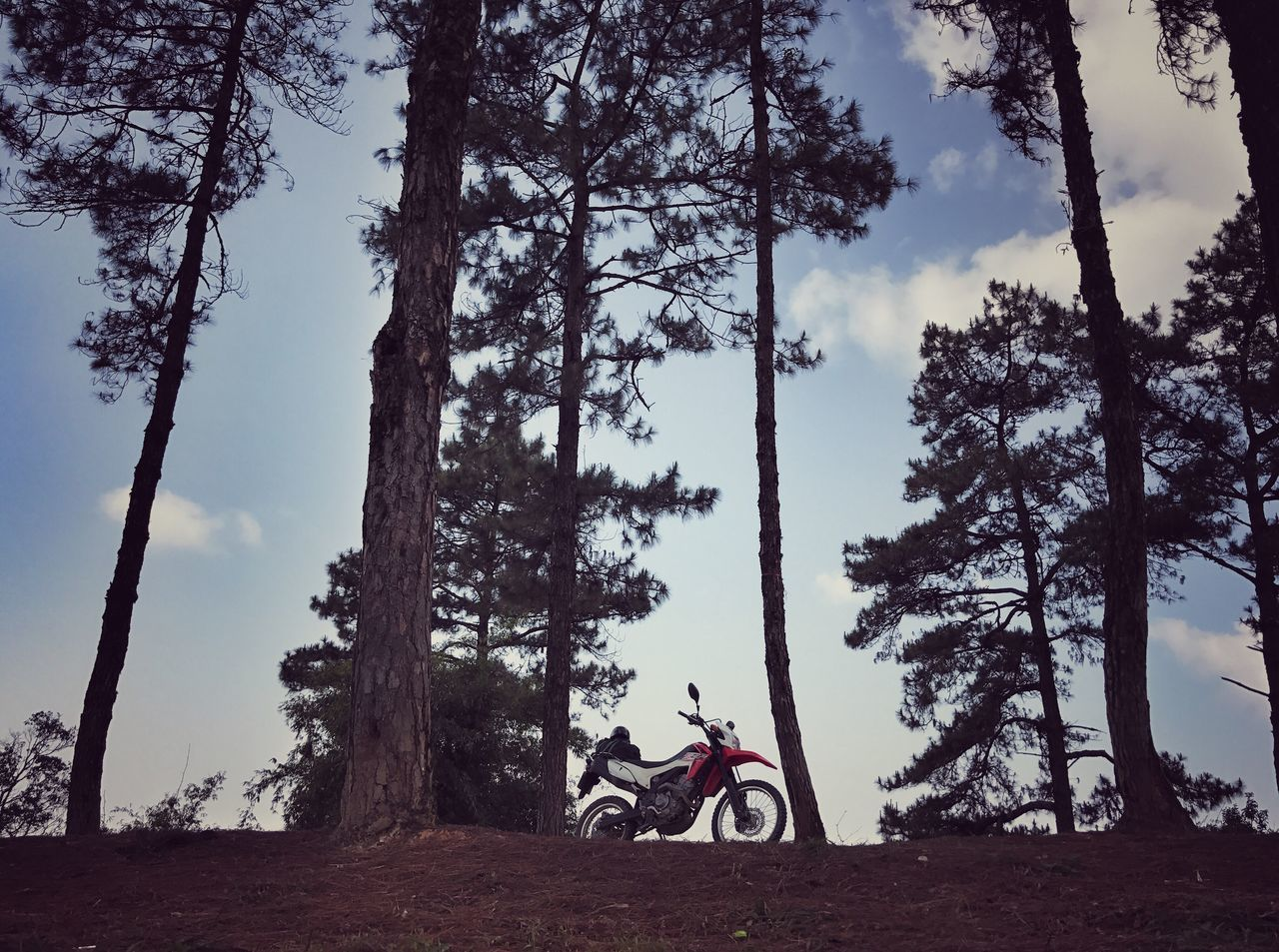 Alone in National Park Tree Riding Transportation Sky One Person Outdoors Full Length Real People Nature Day People Pine Tree Motocross Enduro No People National Park Biker Motorcycle Land Vehicle Speed Thailand Northern